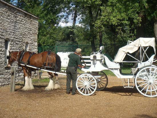 Fleur-de-Lys Mansion: Driver prepping the horse for the carriage ride