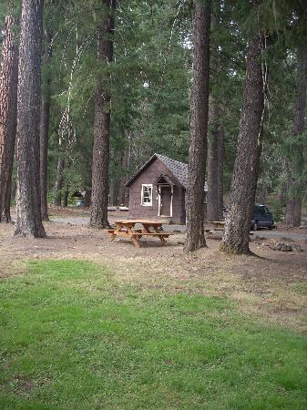 Union Creek Resort: Cabins nestled in the woods.