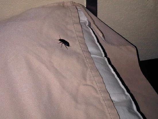 Hampton Inn & Suites Altus: crawling on pillow on nightstand next to bed