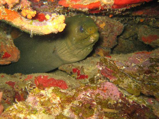 Paradise Scuba and Snorkeling Center: Moray Eel