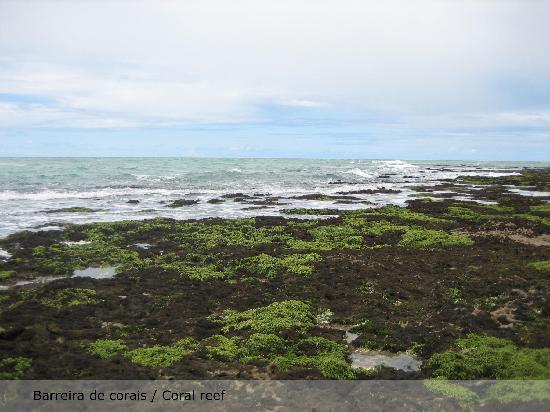 Casa Acayu Pousada & Bungalows: Barreira de corais