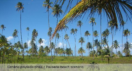 Casa Acayu Pousada & Bungalows: Cenário coqueiros e praia