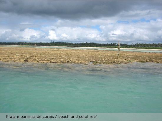 Casa Acayu Pousada & Bungalows: Barreira de corais na praia