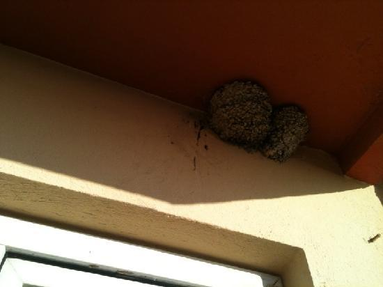 Club Hotel Lion: Infestation Nest !! :-((
