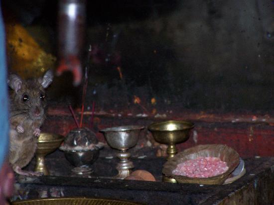Golden Temple (Hiranya Varna Mahavihar): golden temple sacred mouse
