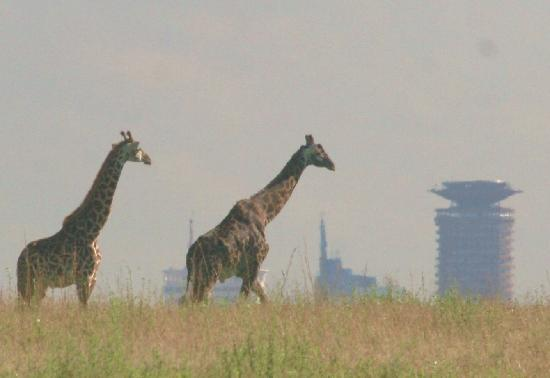 Nairobi Tented Camp : The park in the city