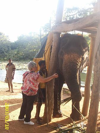 Pinnawala, Sri Lanka: monica the elephant