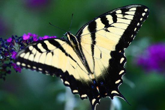 Delicieux Atlanta Botanical Garden: Butterflies In The Garden