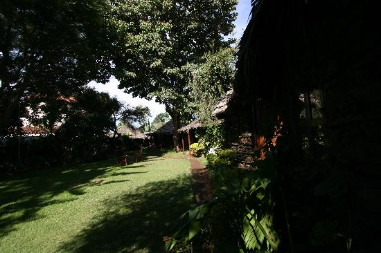 L Oasis Lodge and Restaurant Hotel : Nice and green