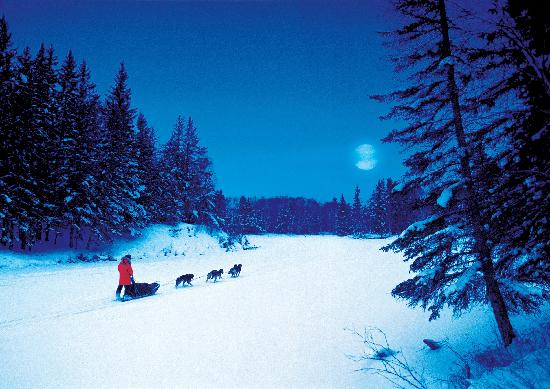 Dog sledding in northern Saskatchewan
