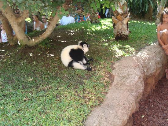 Bioparc Fuengirola : en la isla de los lemures.