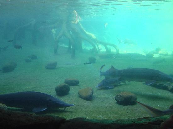 Bioparc Fuengirola : fondo marino.