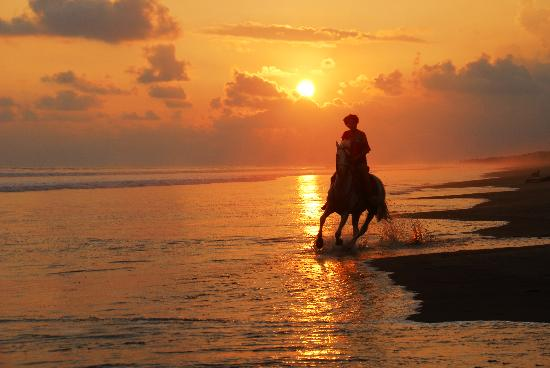 The Riding Adventure: Galloping on the sunset