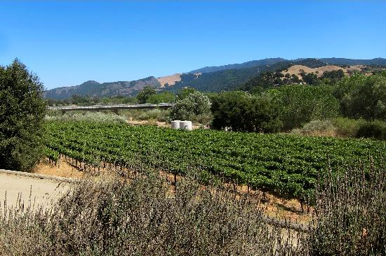 Santa Ynez, CA: The Vineyards