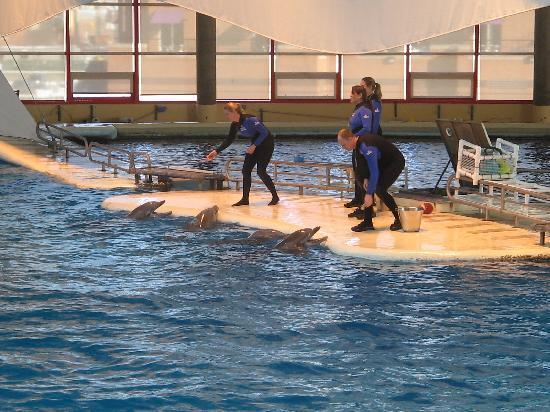 National Aquarium: Dolphin show in progress
