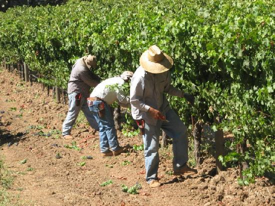 Sonoma County, Califórnia: guys at work