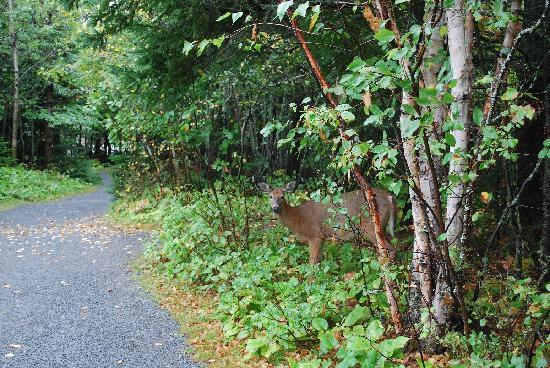 Le Bic, Kanada: Deer