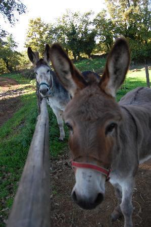Sorano, Italy: La Peppa e la Fiorella