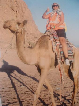 Jaz Sharks Bay: Riding camel during Ultimate Dessert Experiance