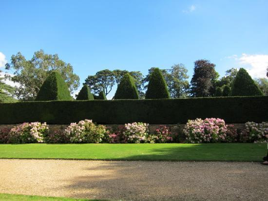 Athelhampton House and Gardens: view over hedge to the Great Court yews