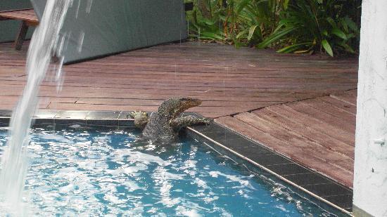 D'Coconut Lagoon: Na? Lust auf ein Bad im Pool?