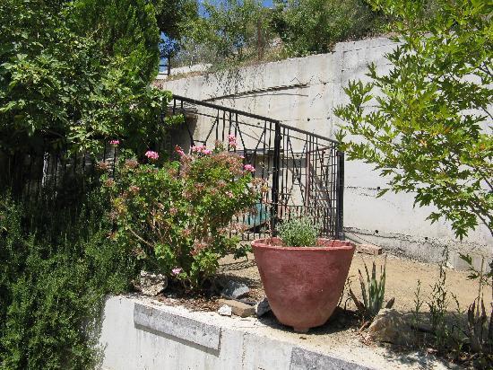 To Spitiko toy Archonta: Blumen in Treis Elies