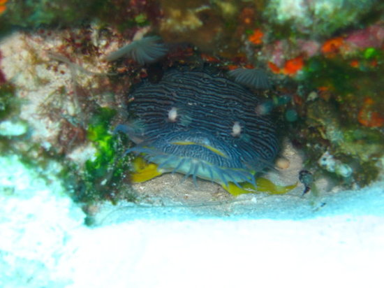 Occidental Cozumel: diving with palancar