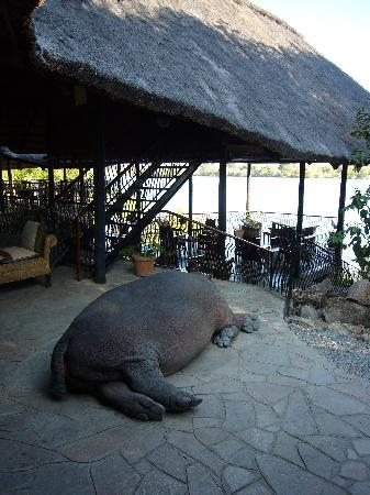 Kafue National Park, Sambia: The hippo