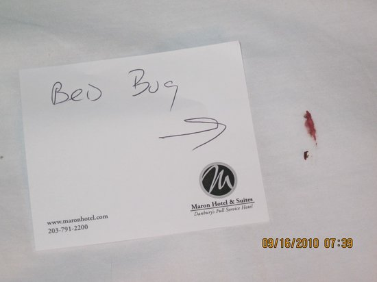 Maron Hotel & Suites: Bed Bug