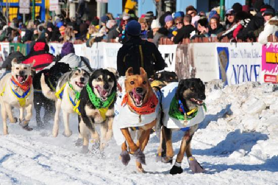 Anchorage, AK: Start of the Iditarod Trail Sled Dog Race, photo by Rebecca Coolidge/ACVB