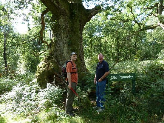 Wiltshire Walks: Old Paunchy!