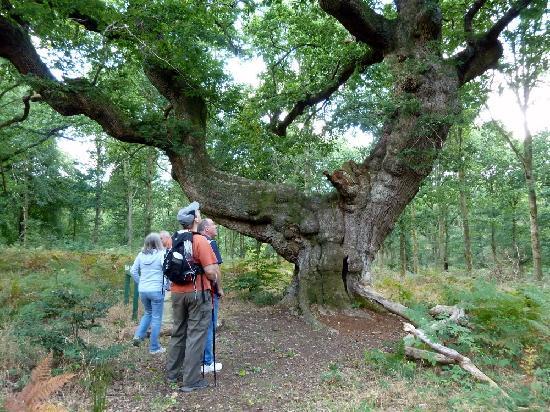 Wiltshire Walks: Saddle Oak 1