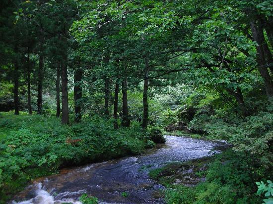 白銀公園散策コースに流れる小川...