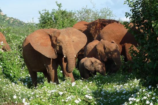 Kilaguni Serena Safari Lodge: Game drive