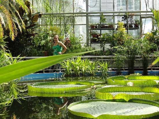 Клуж-Напока, Румыния: in de Botanic Garden.  Cluj