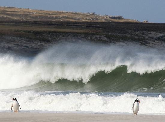 East Falkland, Falkland Islands: Surf's up at Bluff Cove Lagoon