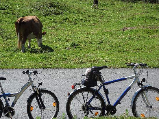 Ferienclub Bellevue am See: The bikes en route