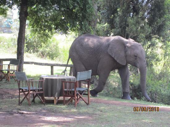 Little Governors' Camp : Elephants visit during lunch!