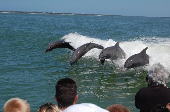 The Westin Cape Coral Resort At Marina Village: dolphins