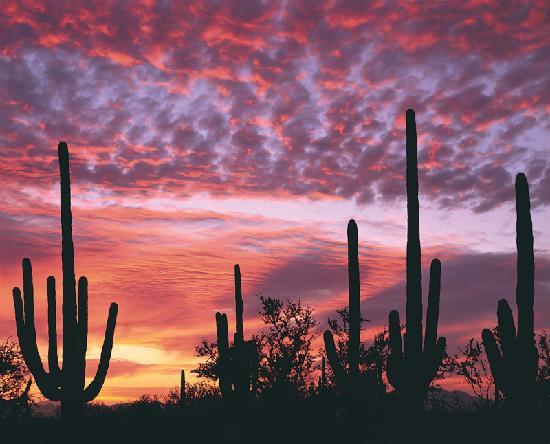 Тусон, Аризона: Tucson days are warm and sunny, and nights are cool and comfortable. Our mild temperatures durin