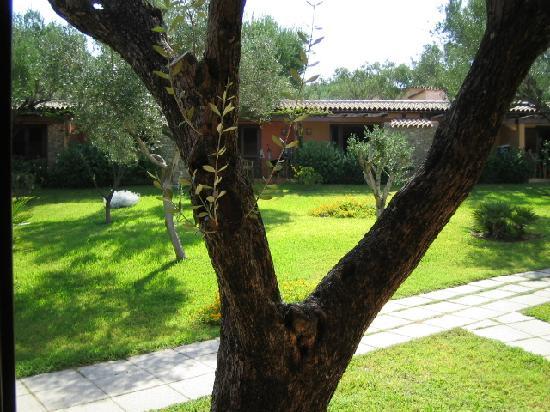 Villaggio degli Olivi: veduta dalla porta della mia camera