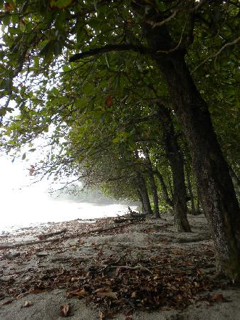 Milarepa: Beach