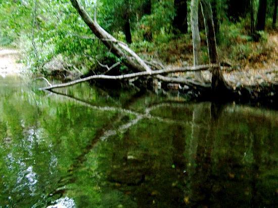 Fernwood Resort: Big Sur River at Fernwood