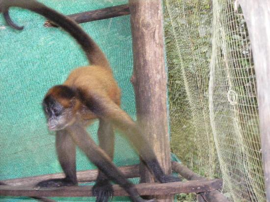 Turu Ba Ri Tropical Park: Monkey
