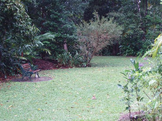 Red Mill House in Daintree: View from the breakfast table--peaceful backyard with lots of cool birds