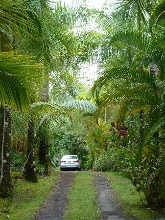 Art and Orchids: Driveway