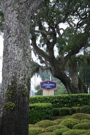 Hampton Inn Amelia Island at Fernandina Beach: Nestled among the trees....