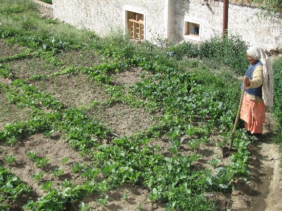 Shanti Guest House: The Private Garden Patch Growing Fresh Vegetables