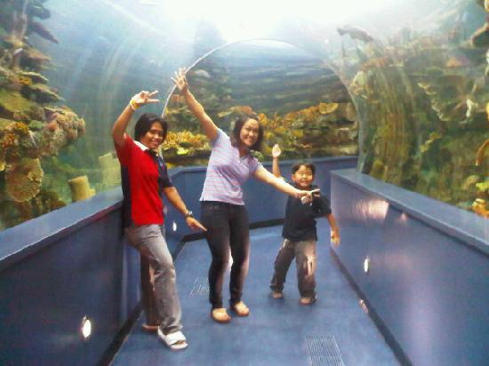 Sharjah Aquarium Yahoo!