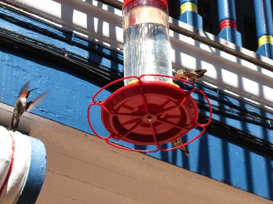 Hummingbirds at the station in Manitou Springs.